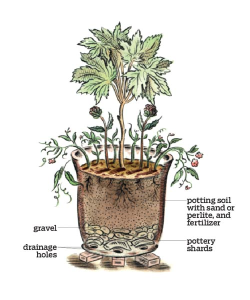 07-container-plant