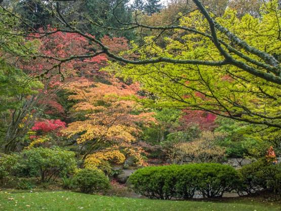 Fall%20colors%20Japanese%20Garden%20Seattle-10-L.jpg