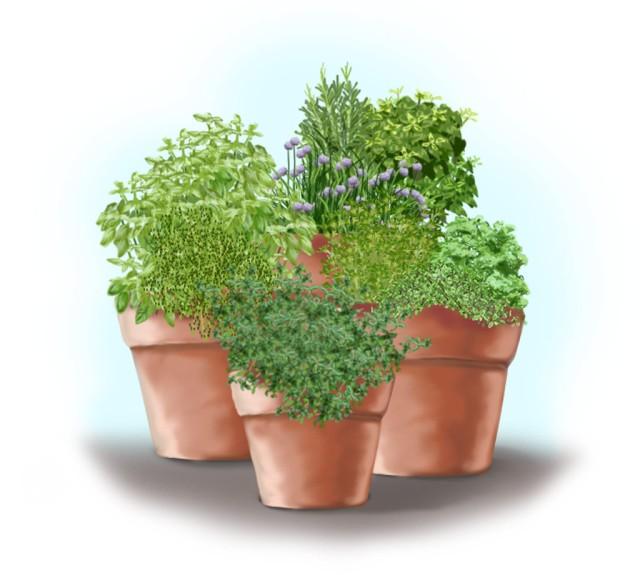 herb-container-garden-front-web.jpg